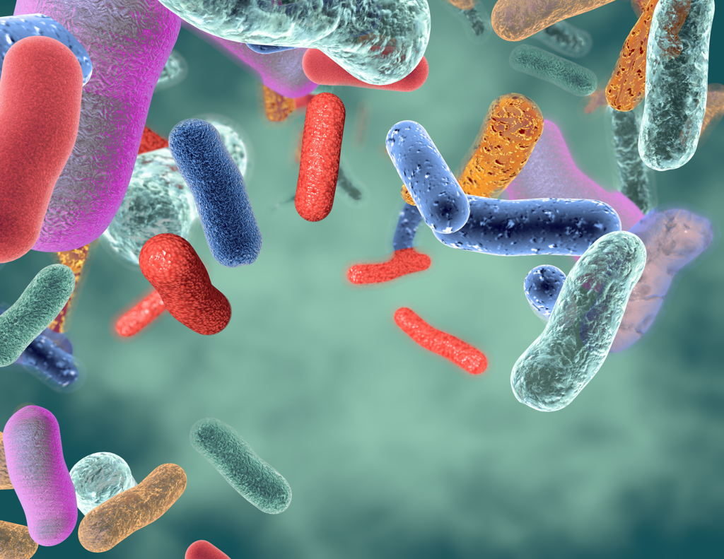 Types of Probiotics -