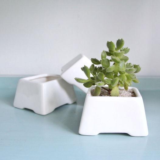 Суккулент в белой керамике «Табурет»