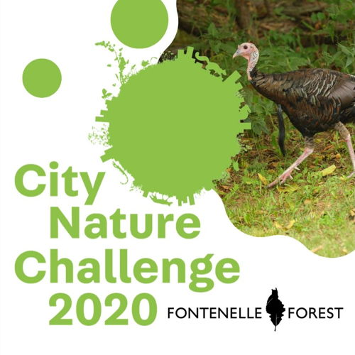 Picture of Help the Omaha Metro compete in the 2020 City Nature Challenge!