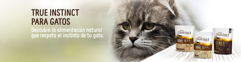 HomeHeader_Gatos.jpg