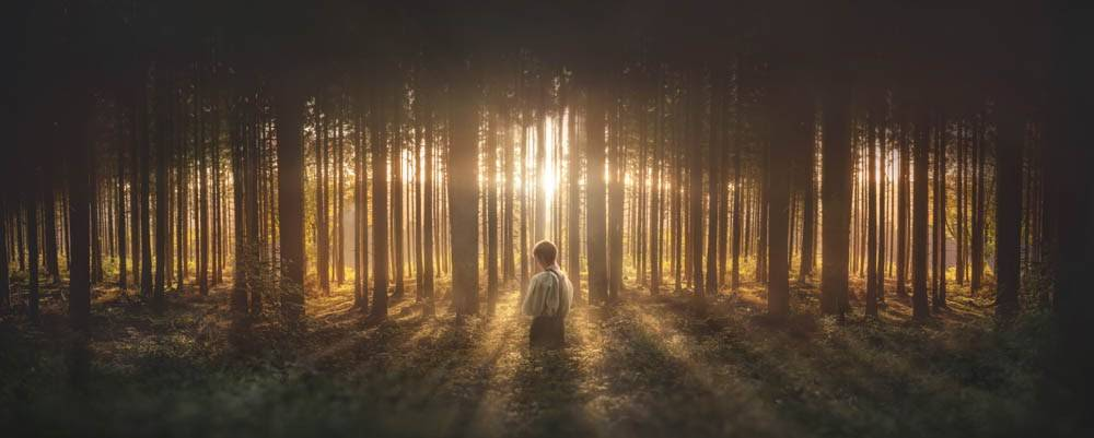 Panoramic picture of Joseph Smith praying in the Sacred Grove. The sun shines brightly through the rows of trees.
