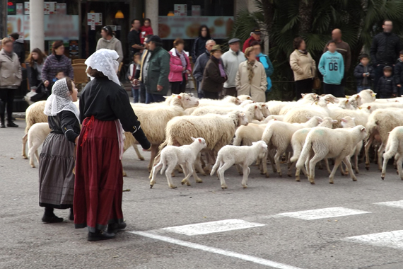 Pollensa - Animal Blessing, Sant Antoni, Mallorca North
