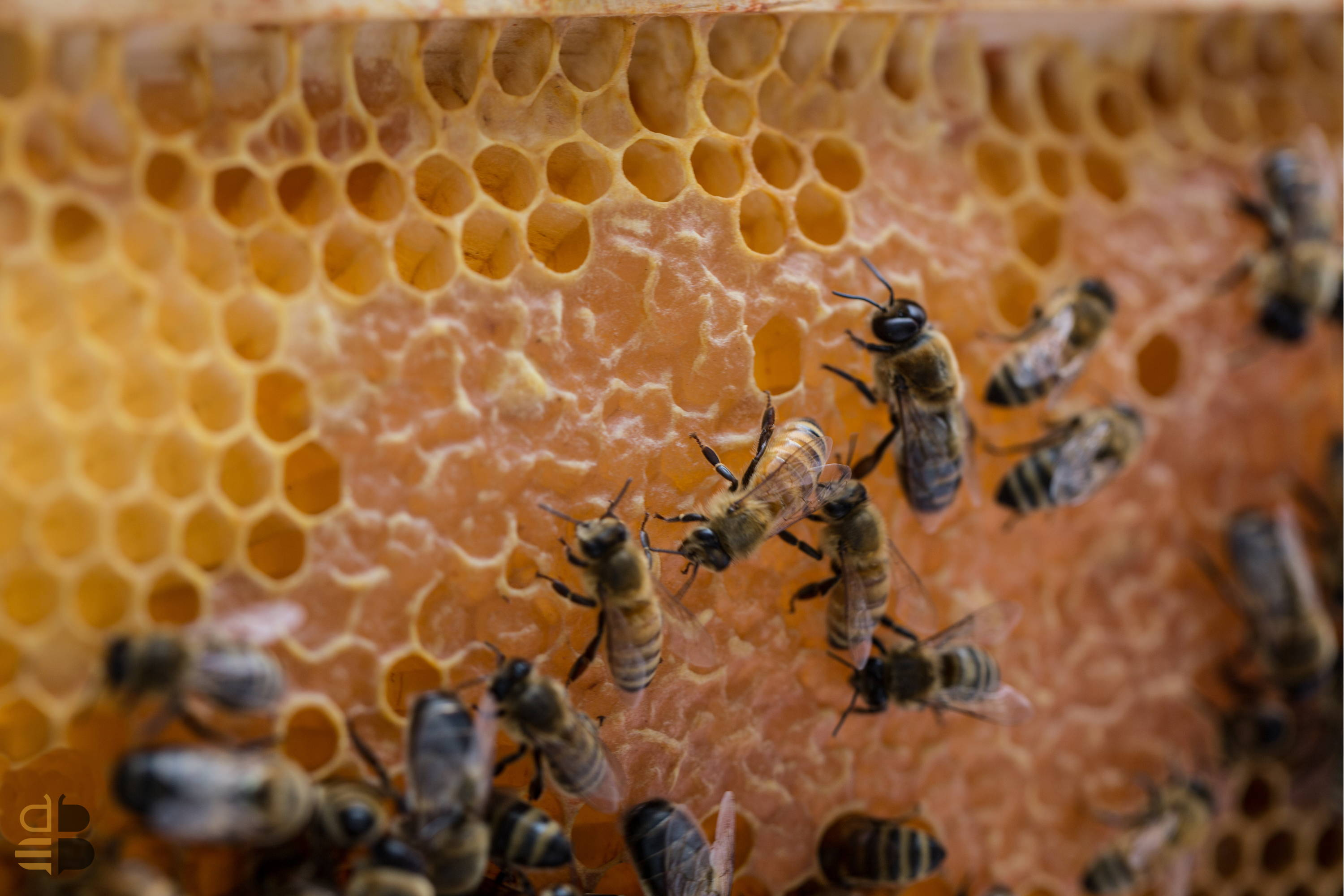 ORGANIC TREATMENTS AND HIVE ECOLOGY