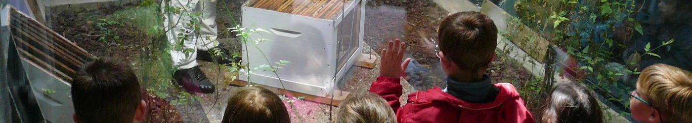 enfants et abeilles