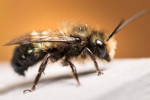 everything you need to know before keeping mason bees bee built