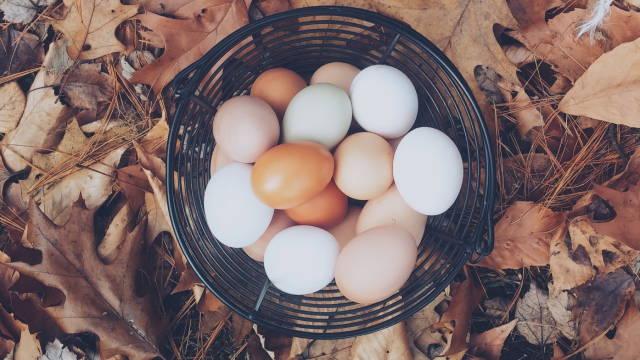 En kurv med æg, som ganske enkelt henviser til at man ikke skal lægge alle sine æg i én kurv - heller ikke når det kommer til investering