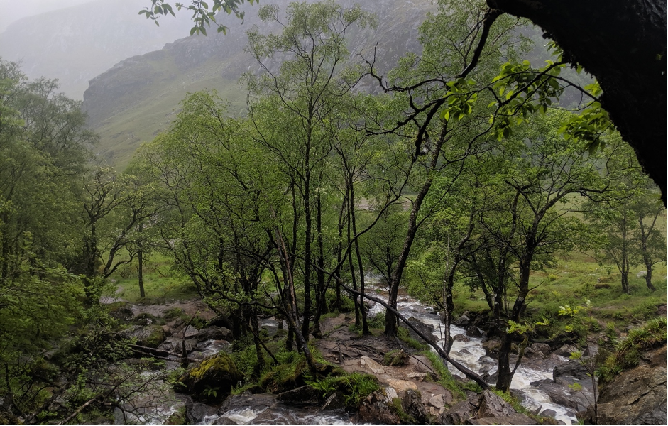 A photograph of a typical woodland in the Scottish Highlands taken by our co-founder, Tristan.
