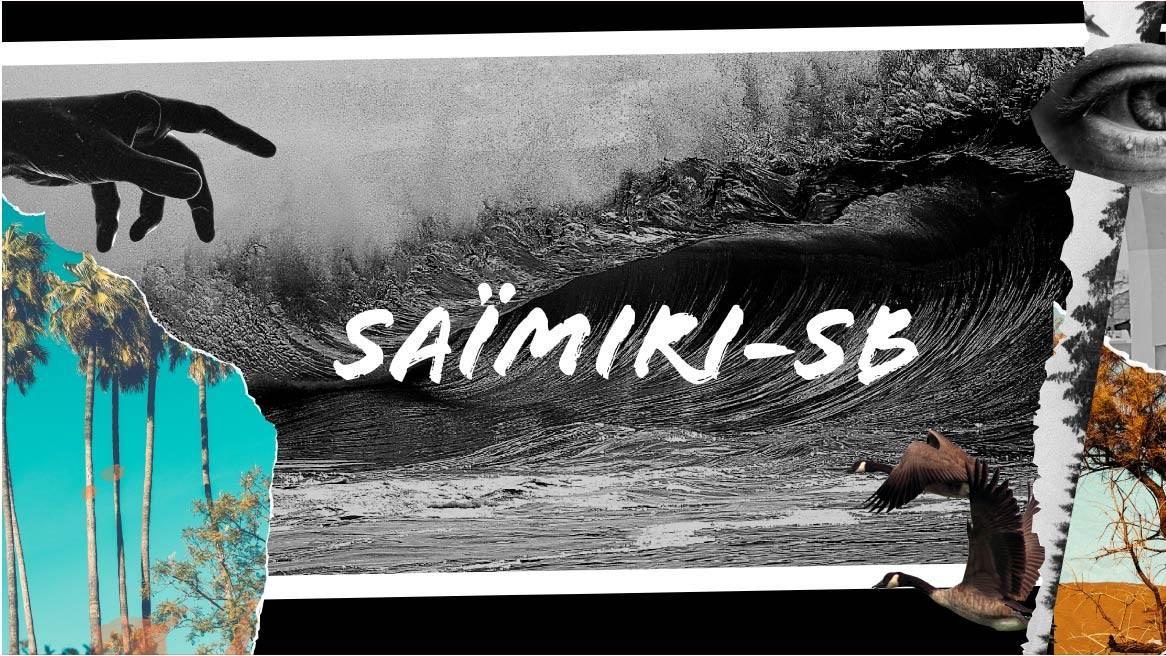 On voit 7 riders, avec des planches de surf, des planches de skates, ou longboard. En fond, on voit les montagnes et des palmiers. Ils portent tous des vêtements de la marque Saïmiri-SB, des hoodies, sweats à capuches, pulls, tee-shirt et débardeurs, en coton bio et éco-responsable.