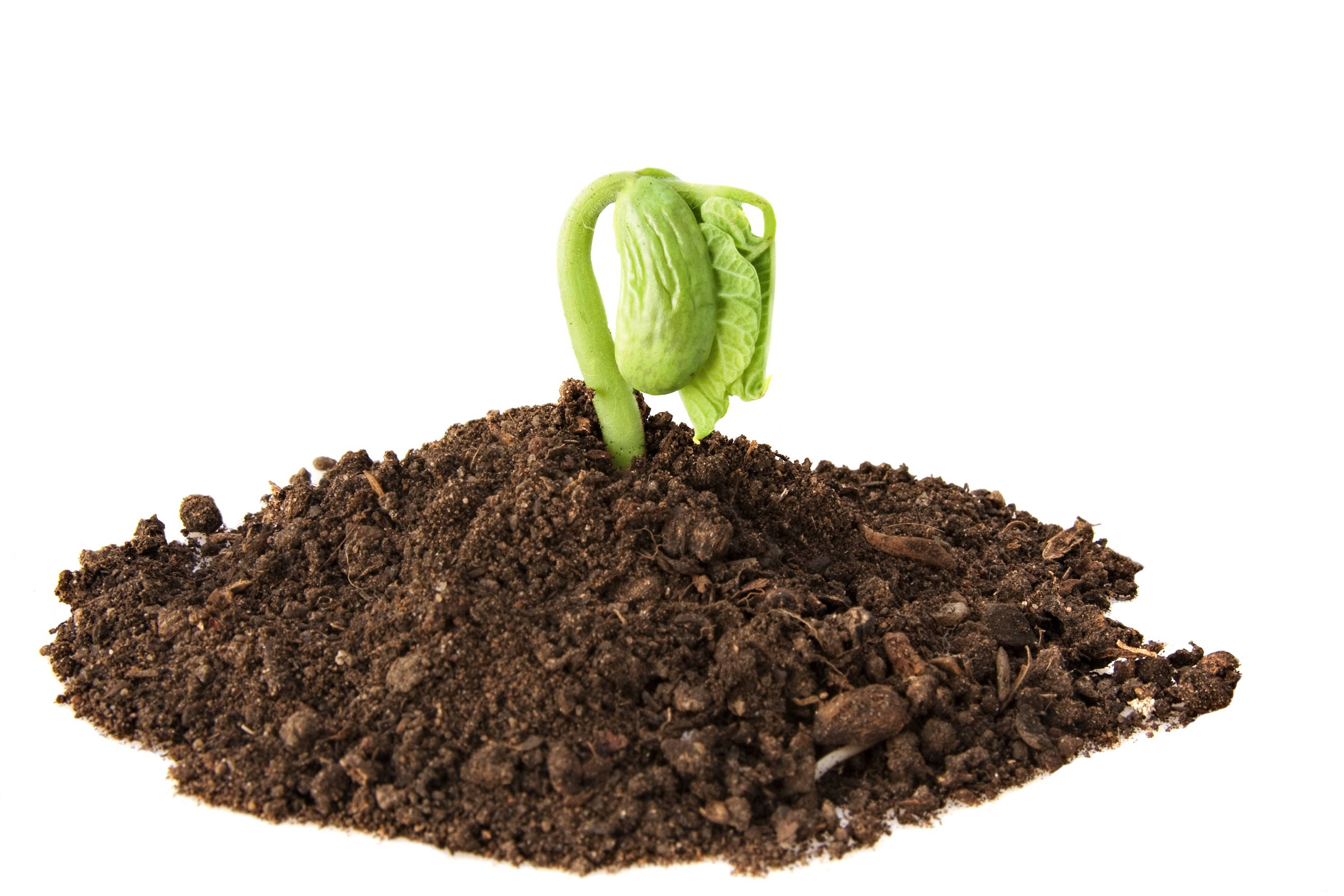 small green sapling growing from humic acid