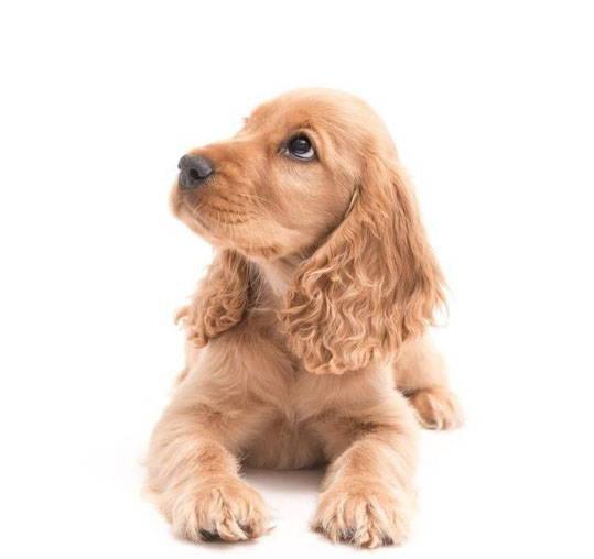 Hat dieser Hund Erbkrankheiten? vetevos Gentest gibt Gewissheit