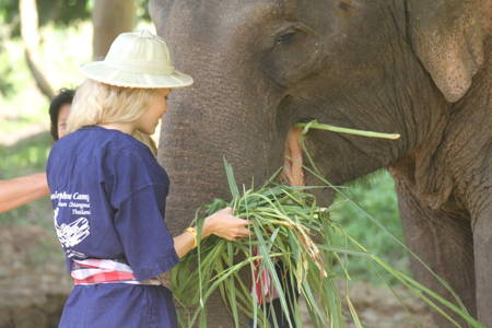 Take Care of an Elephant