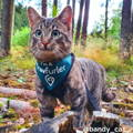 Travel Cat Bandy Instagram Page