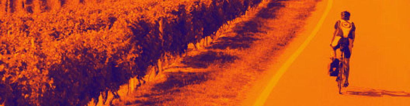 Велосипедная прогулка от Ниагарского водопада по виноградникам с обедом и дегустацией вин.