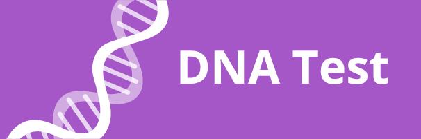 Link zu den DNA-Tests für Hunde