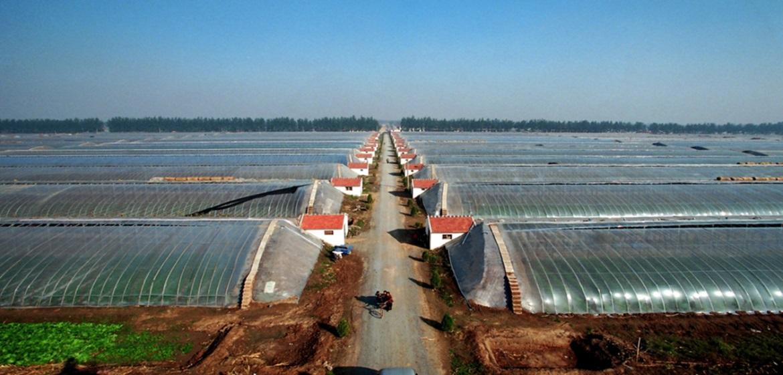 Kansen in sector tuinbouw