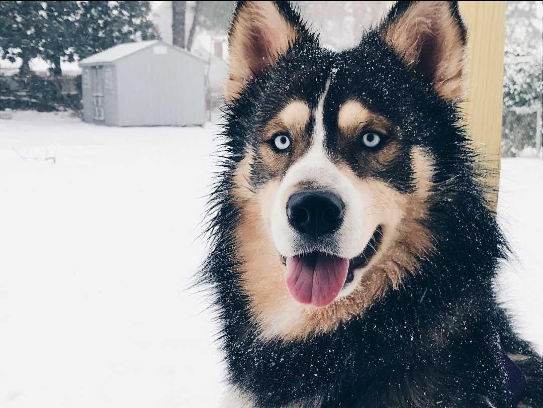 titan the dog in snow