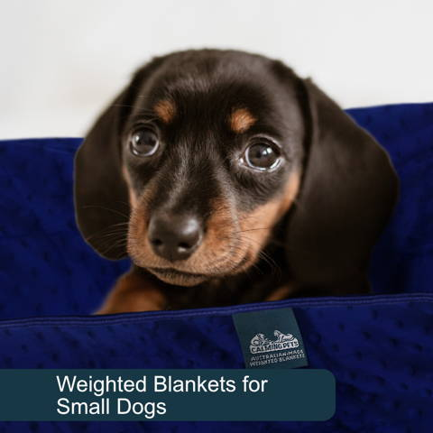 Weighted blankets for small dogs