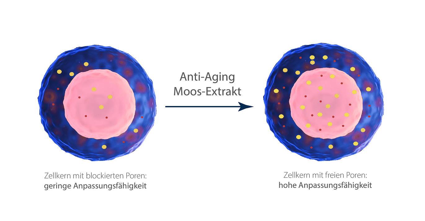 Moos gegen Falten Zellkern Vitalität