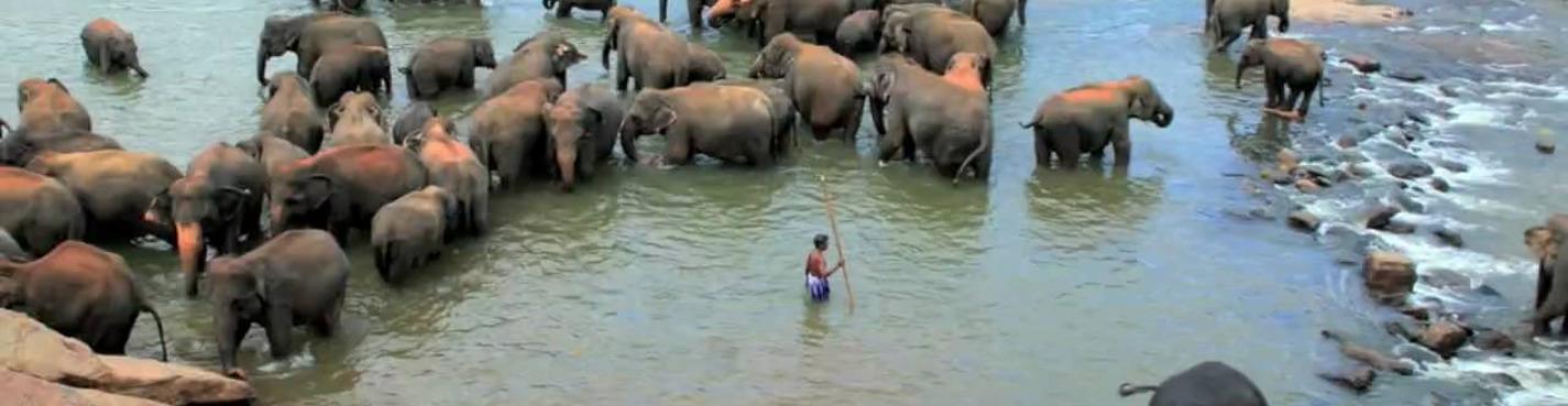 Большой 4-дневный тур по Шри-Ланке (Сигирия-Дамбулла-Канди-Нувара-Элия)Элла