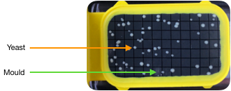 Yellow tester with yeast and mould colonies
