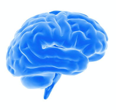 Brain, oxidative stress, PC: Clipart Library