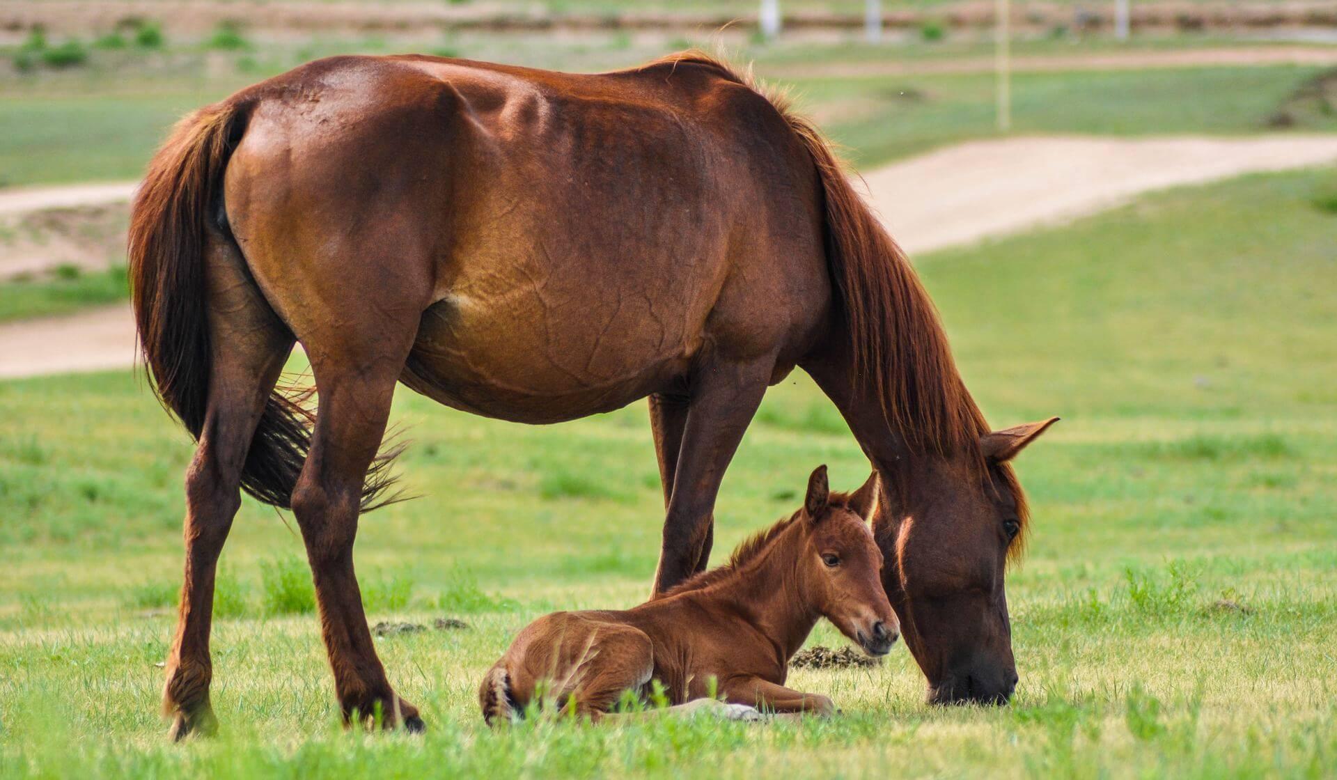 Pferde entwurmen - wann sollte man eine Wurmkur verabreichen?