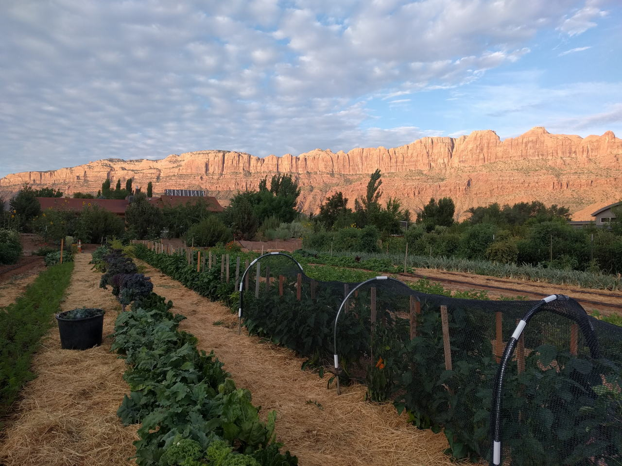 Early morning at Easy Bee Farm in Moab, Utah // read about what it's like to harvest at the farm on www.bridgidgallagher.com >>