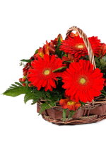 HF Red Gerberas Basket