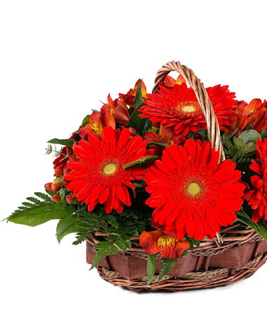 HF Red Gerberas Basket