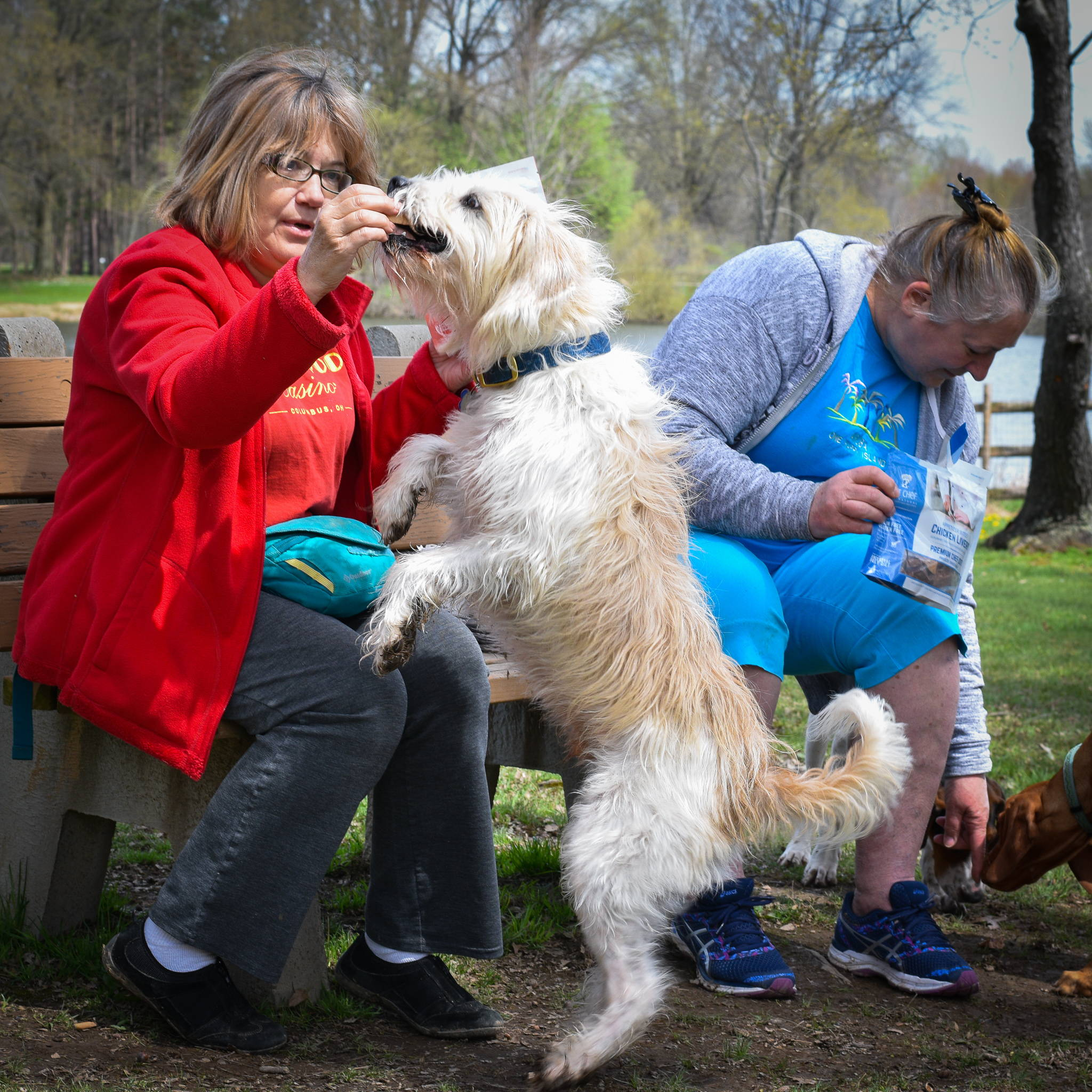 Healthy dog treats being shared at the park from pet Chef