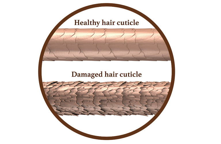 Healthy and damage hair cuticule