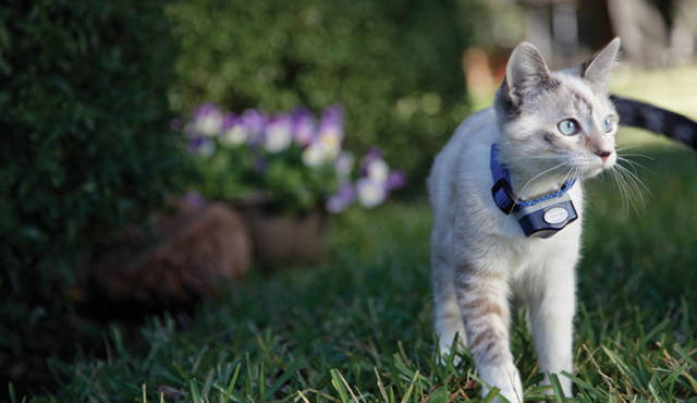 electric shock collar for cat containment