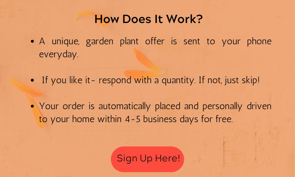 How Does It Work? A unique, garden plant offer is sent to your phone everyday.  If you like it- respond with a quantity. If not, just skip! Your order is automatically placed and hand delivered within 4-5 business days for free.