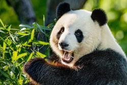 kindergeburtstag im zoo panda