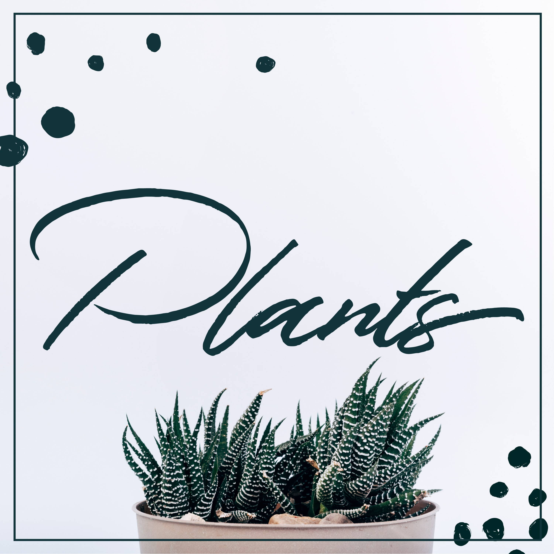 House Plants Rochester NY