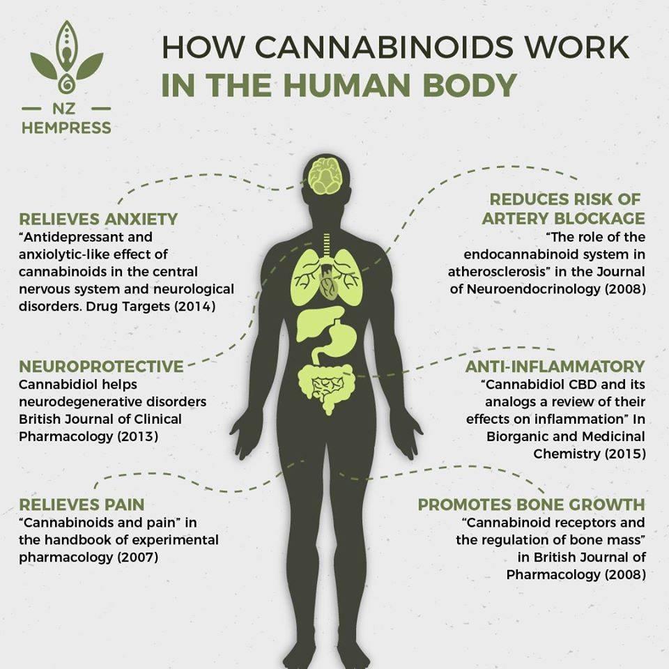 endocannabinoid system nz