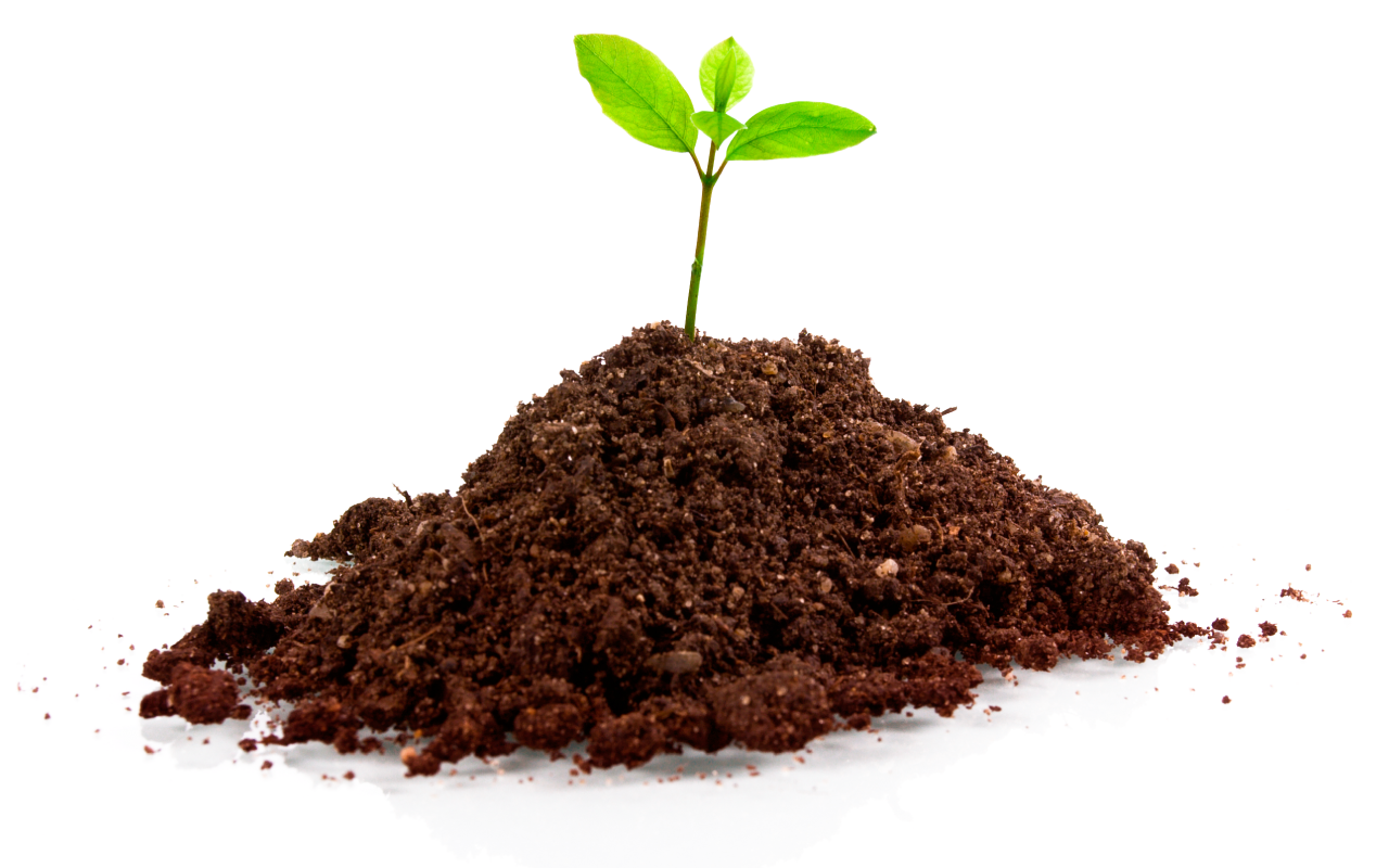 organic and natural soil with small green sapping growing