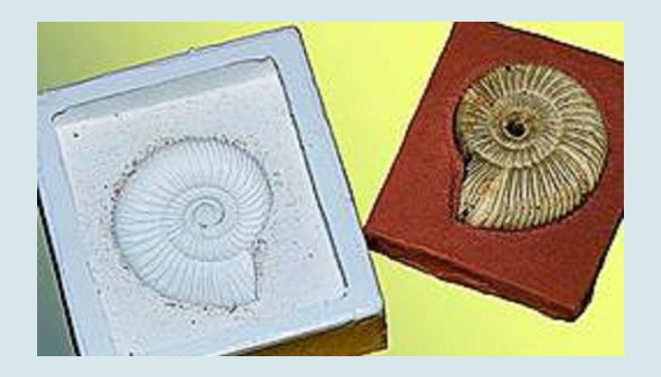 wasserschloss werdingen fossilien