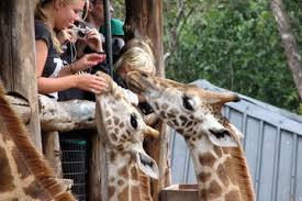 See the Highlights of Nairobi in One Day