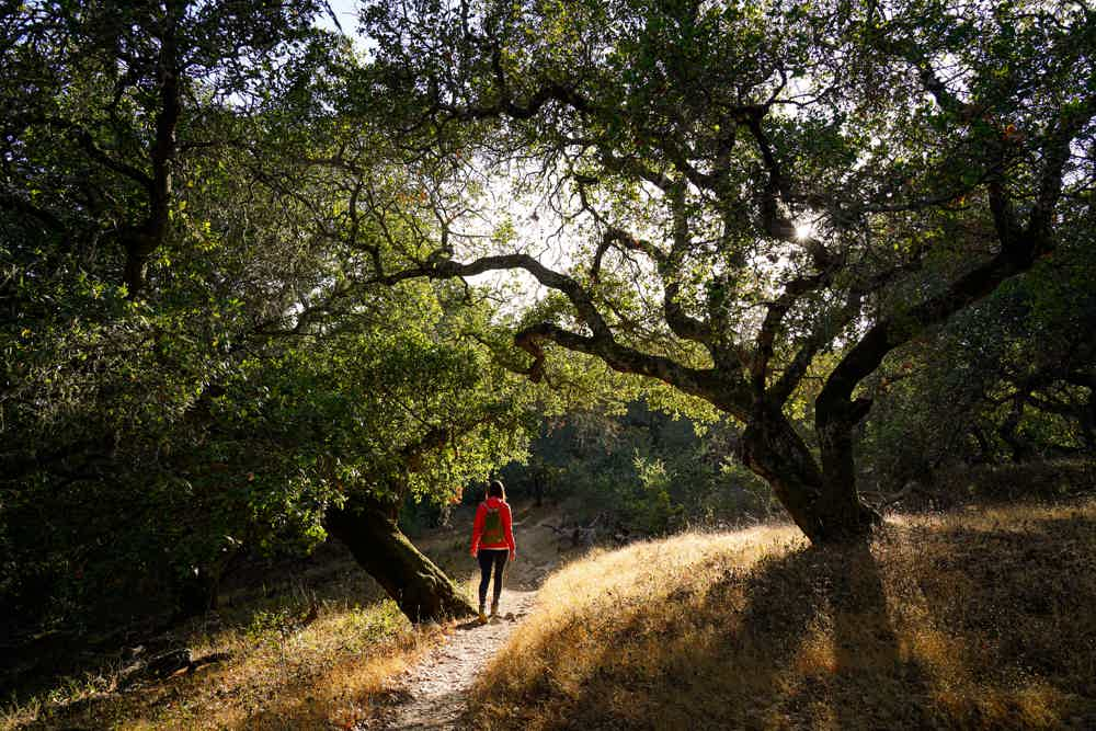 Hike Olompali State Historic Park in Marin