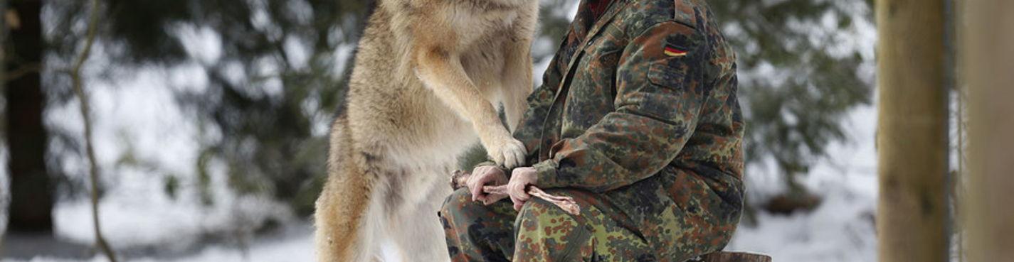 Тур к диким волкам