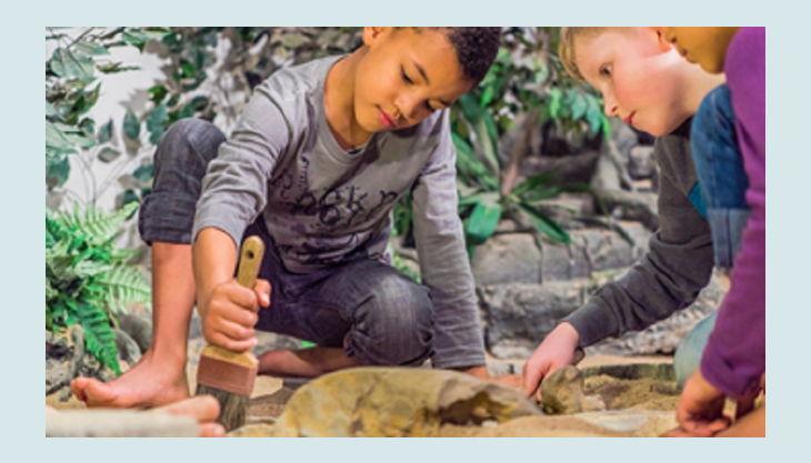 odysseum koeln fossilien erkunden