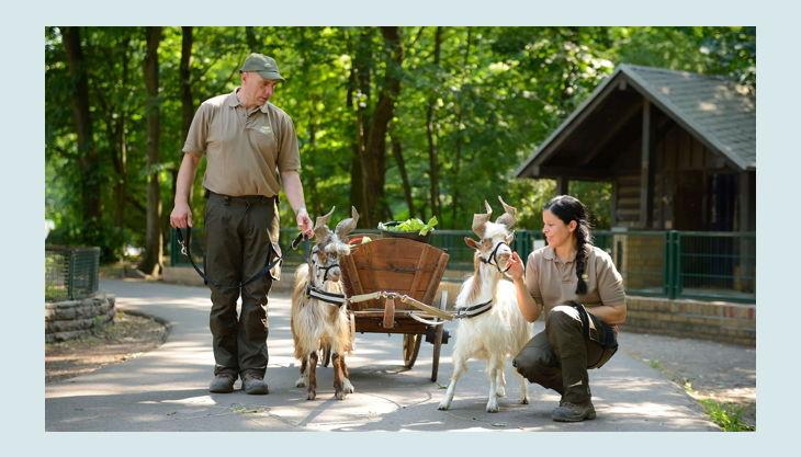 tierpark berlin friedrichsfelde fütterungszeit