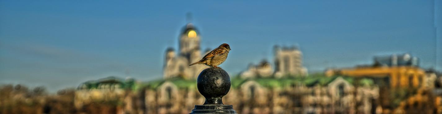 Екатеринбург-купеческий (индивидуальная пешеходная экскурсия)
