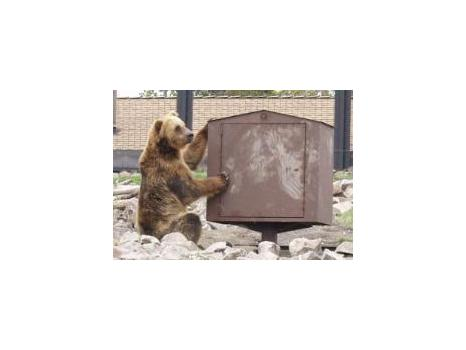 No Bear Can!