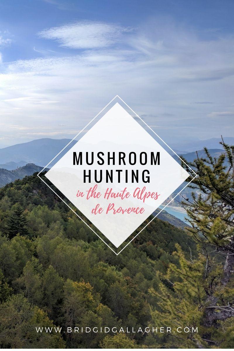 Mushroom Hunting in the Haute Alpes de Provence, France on www.bridgidgallagher.com