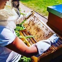 Besuch in der Imkerei mit Blick ins Bienenvolk