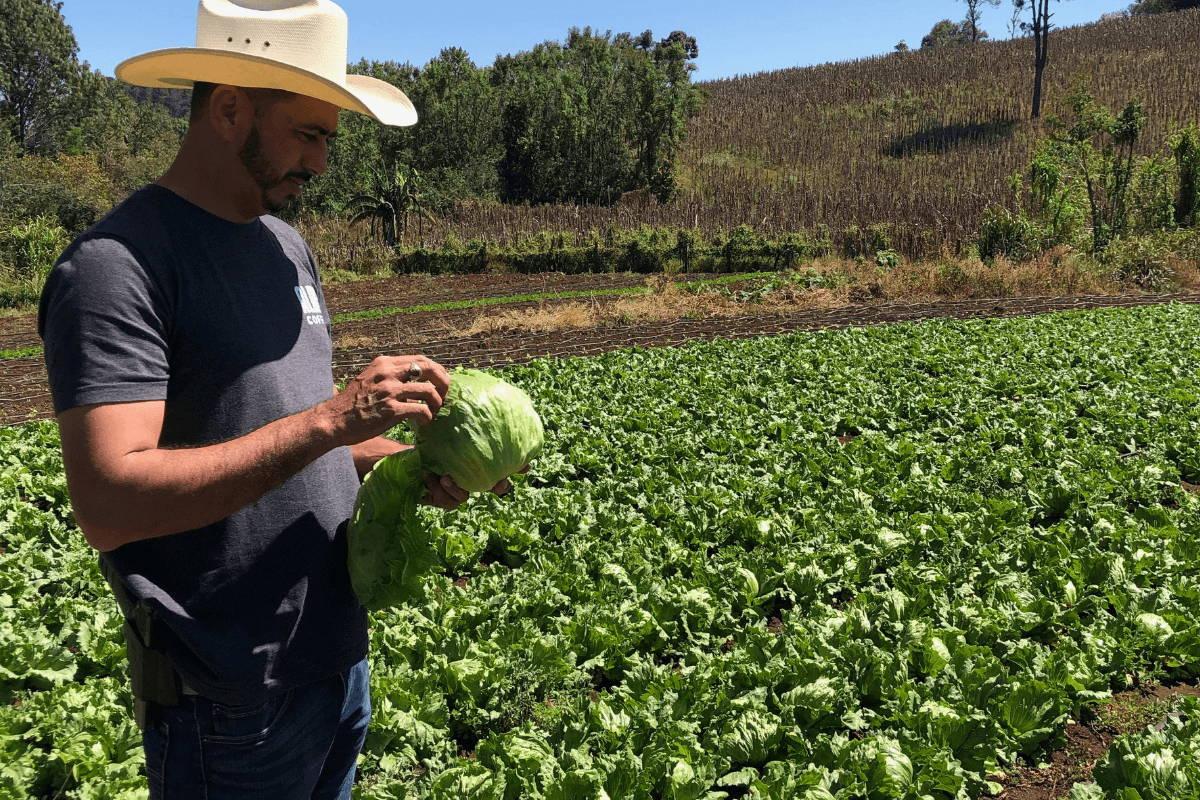 Coffee farmer eating lettuce