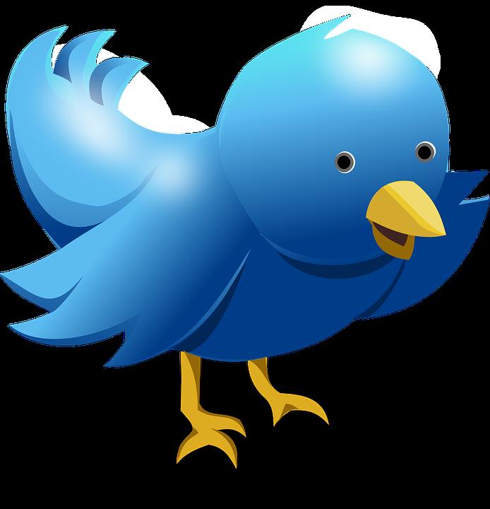 زيادة متابعين تويتر