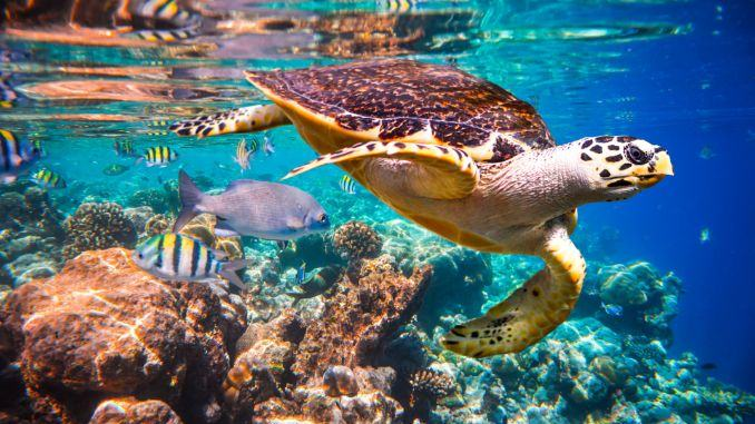 Ocean life in the Maldives